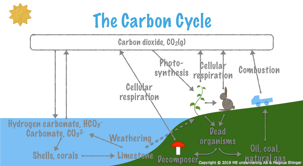 The carbon cycle.
