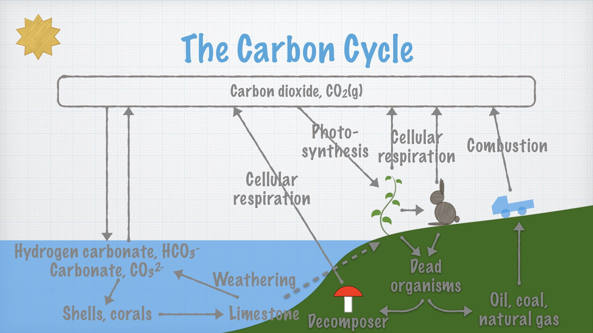 The Carbon Cycle.001